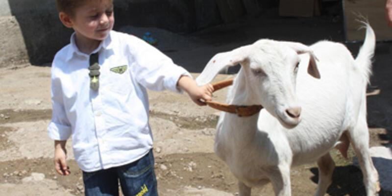 Köydeki keçiye zabıta müdahalesi