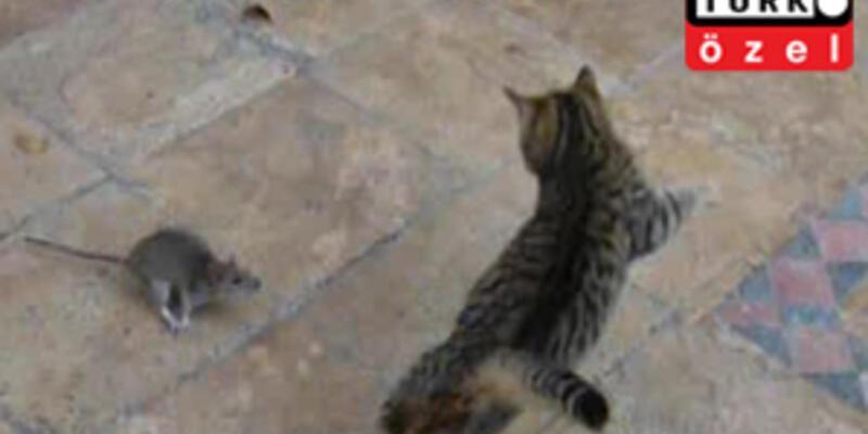 Bu kez fare kedi kovaladı...