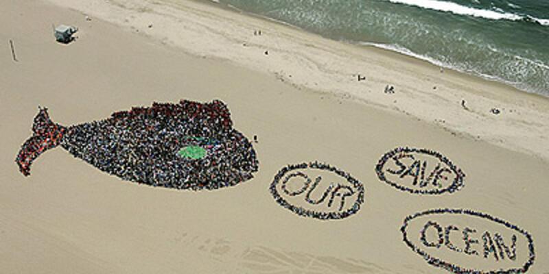 Denizlerin sadece yüzde 1'i koruma altında