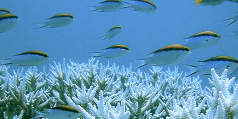 Dünyanın en büyük deniz koruma sahası...