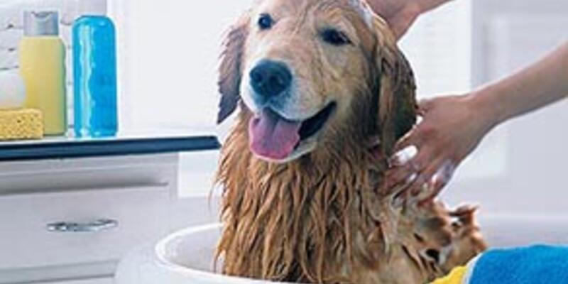 Köpeğinizi çok sık yıkamayın