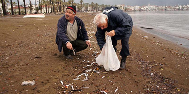 Yüzlerce ölü yavru balık kıyıya vurdu