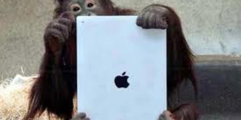 Orangutanların iPad tutkusu!