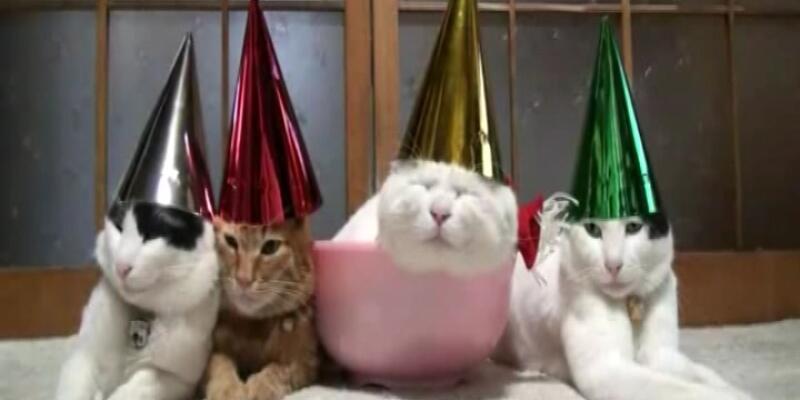 Kediler parti yapınca...