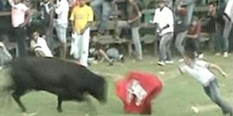 Boğaların hışmına uğradılar!