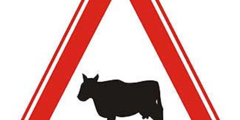 O inek Türk ineği değilmiş!