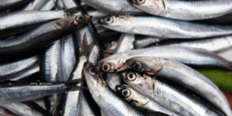 Balıkçılar av sezonundan umutlu