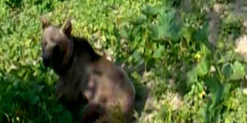 Bahçeye giren ayı korkuttu
