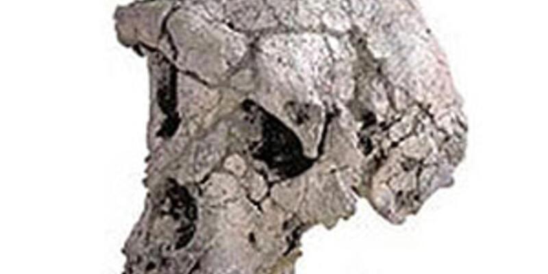 20 Milyon yaşında maymun kafatası bulundu