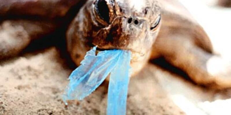 Plastik poşet sizi bir gün aç bırakabilir!
