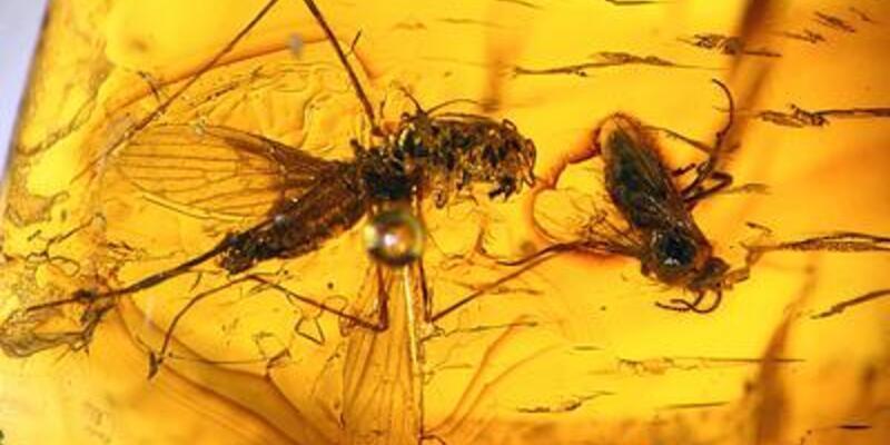 Peru'da 20 milyon yıllık böcekler bulundu