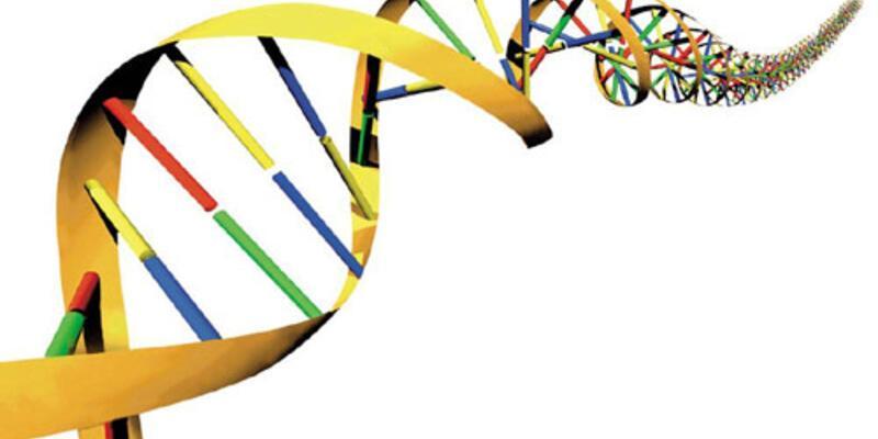 DNA'daki ufak bir değişiklik evrime yol açıyor