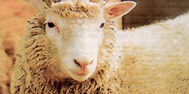 """""""Kopya koyun Dolly """" merakı ödül getirdi"""