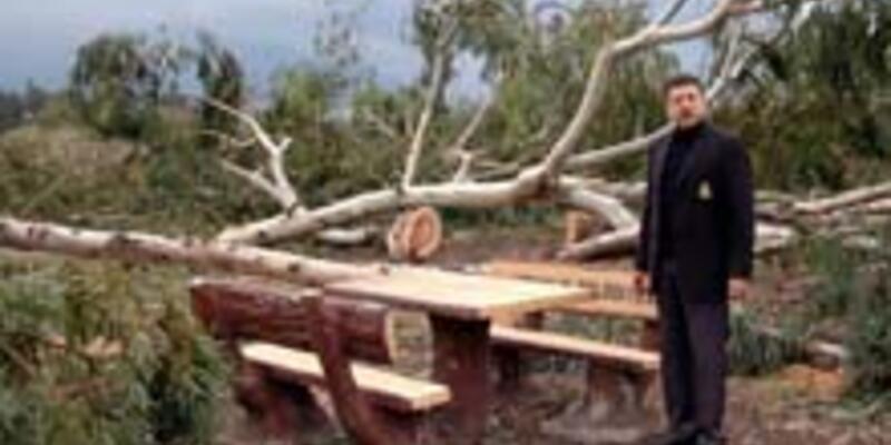 Sanayi bölgesi için bin ağaç kesildi