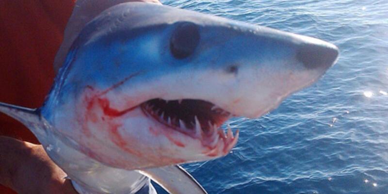 Oltaya Jaws takıldı