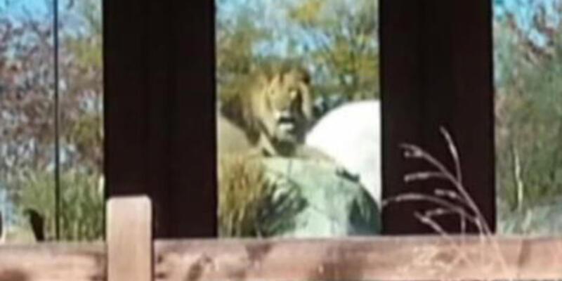 ABD'de hayvanat bahçesinde dehşet!
