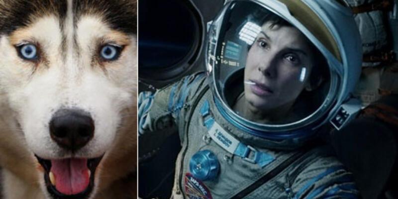 Köpek Oscar'ları sahiplerini buldu