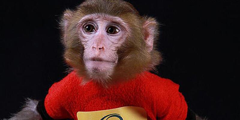 İran, ikinci defa uzaya maymun gönderdi