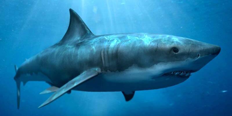 Köpekbalıkları artık tweet atıyor