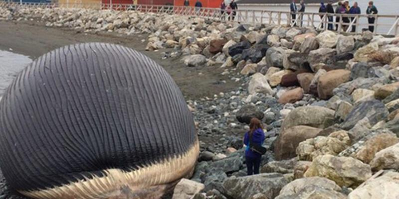 Dev balina her an patlayabilir