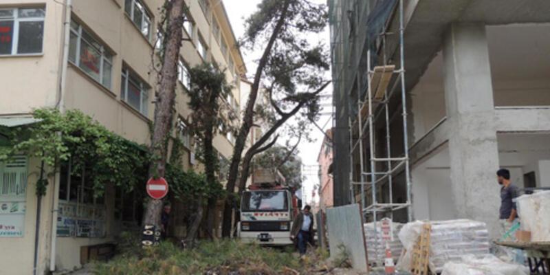 """25-30 yıllık çam ağaçları """"kamu yararına"""" kesildi!"""