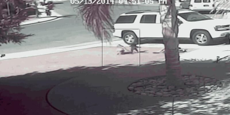 Kahraman kedi küçük çocuğu köpekten böyle kurtardı