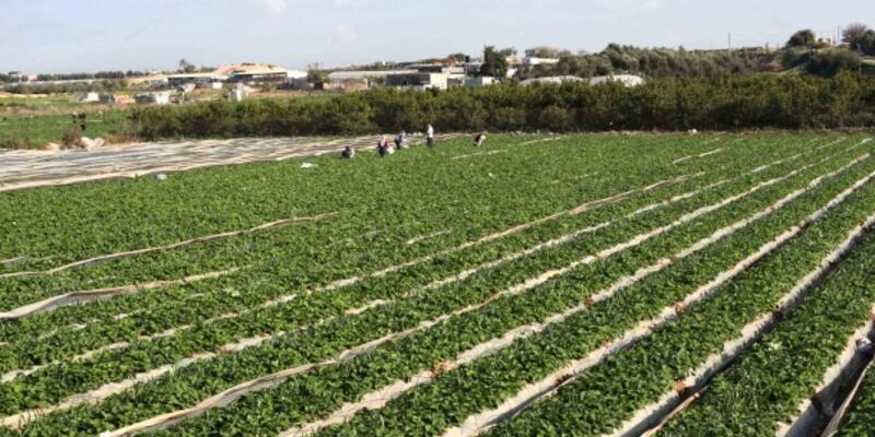 Tarımsal araziler bölünemeyecek