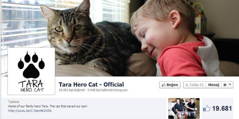 Kahraman kediye Facebook sayfası