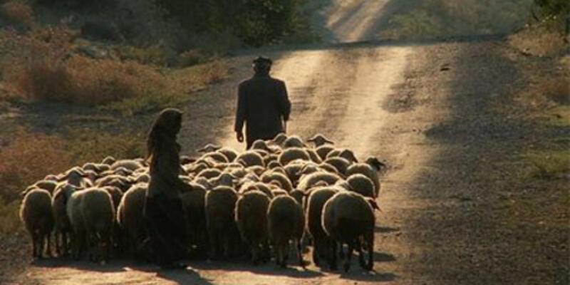 Eğitimli çobanlar geliyor!