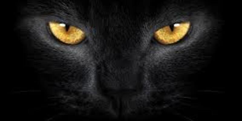 Bizim gördüğümüz kedilere nasıl görünüyor?