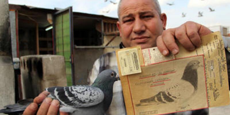 Güvercinlerini satsa iki daire alır!