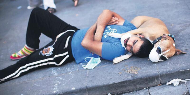 Gezi Parkı'nda ölen hayvanlar için dava