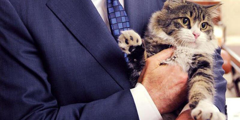 Seçimde trafoları CHP'nin kedisi Şero koruyacak!