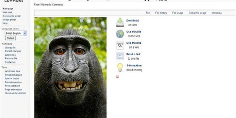 Maymunun çektiği selfie'nin kaderi belli oldu