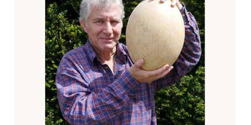 500 yıllık yumurta açık artırmayla satılacak