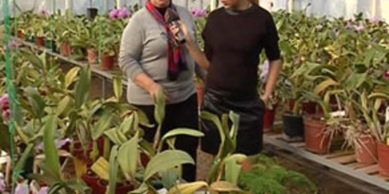 Orkidenin kış bakımı