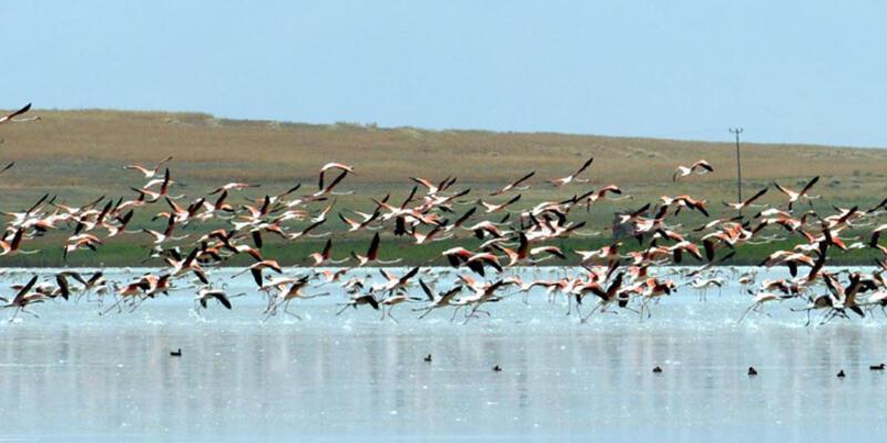 Küresel ısınma Van'ın kuş cennetini yok etti