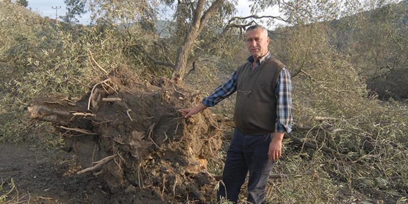 Katledilen 6 bin 666 ağacı 'koruma görevi' Yırca köylüsüne verildi