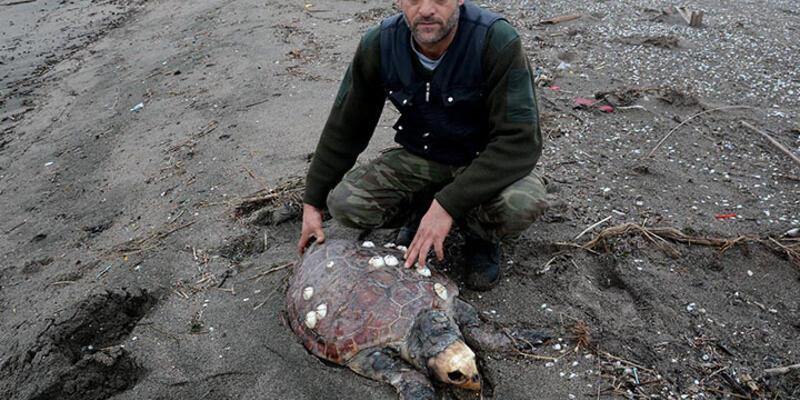 Karacabey sahilinde caretta caretta ölüsü bulundu