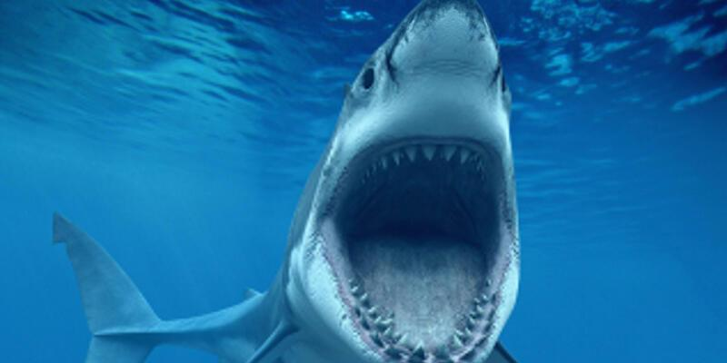 Köpek Balığı Nasıl Yazılır? Köpek Balığı Tdk Doğru Yazılışı... Köpekbalığı Mı Köpek Balığı Mı?