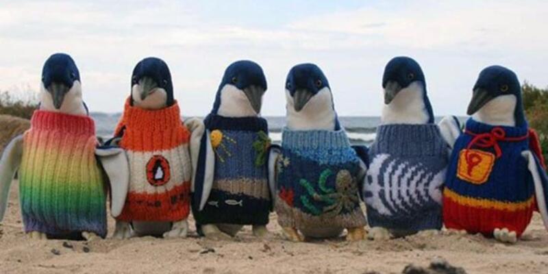 109 yaşında penguenler için kazak örüyor