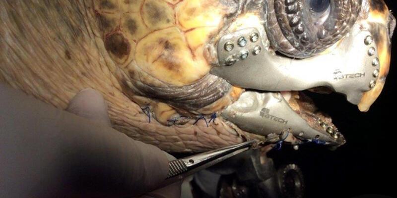 Caretta caretteya 3D çene protezi