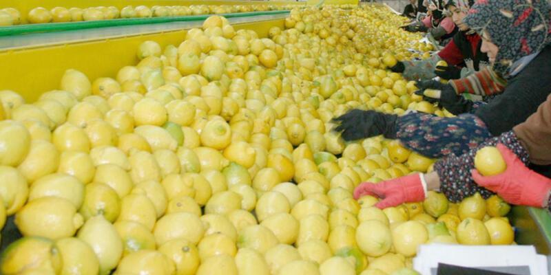 İstanbul'da limon yeniden zam şampiyonu oldu
