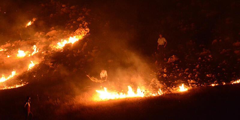 Mardin'de orman yangını çıktı