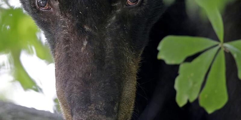 Karabük'te mezardan kaybolan cesedi, ayı mı çıkardı?