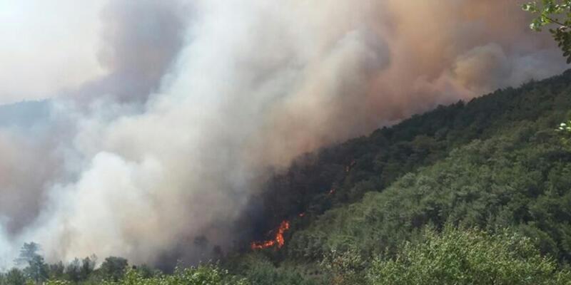 Mersin'de orman yangını nedeniyle bir mahalle boşaltıldı