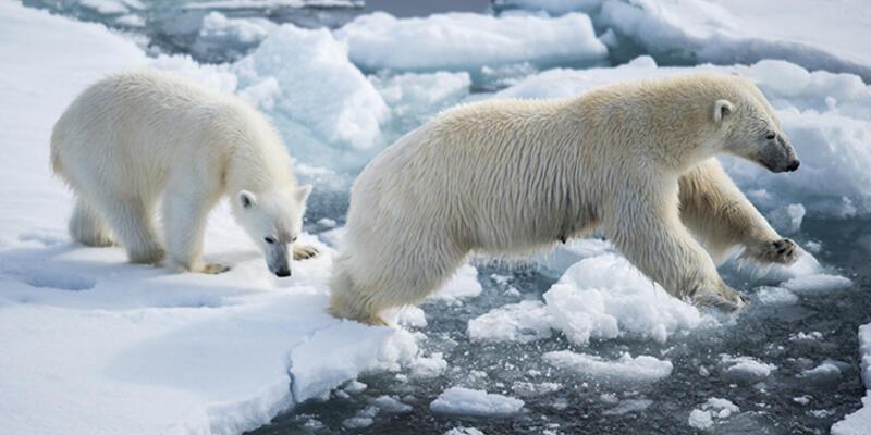 Kuzey Buz Denizi'ndeki buzul seviyesi arttı