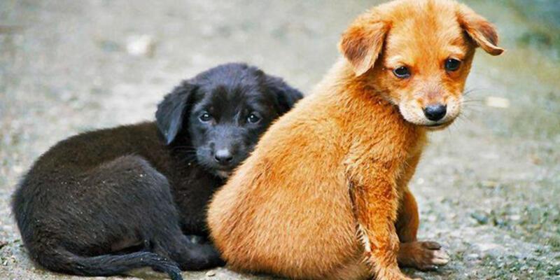 Sokak Hayvanları Fotoğraf Yarışması için son başvurular