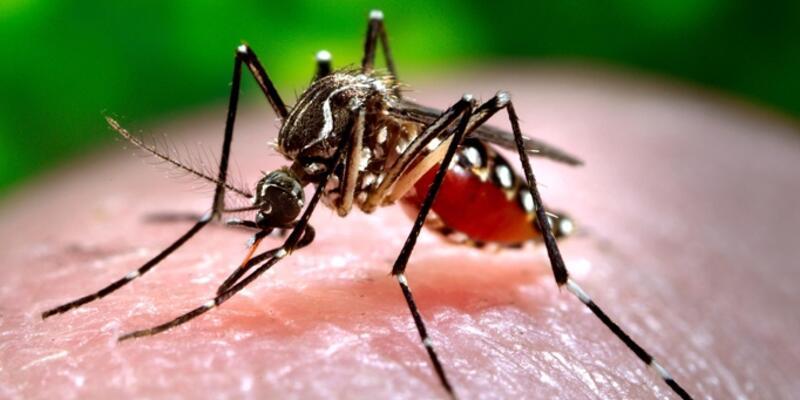 """Çin'de dünyanın en büyük """"sivrisinek fabrikası"""""""
