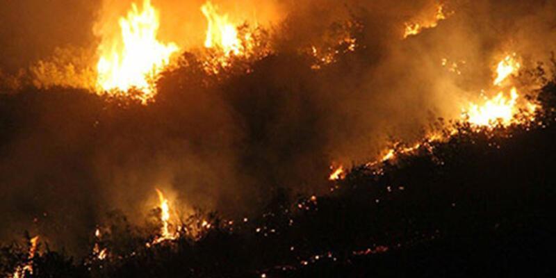Hatay'da 2 noktada orman yangını